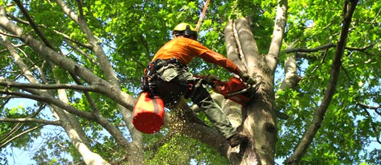 local-tree-services-near-me