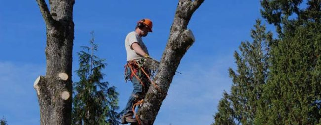 tree-removal-on-private-property