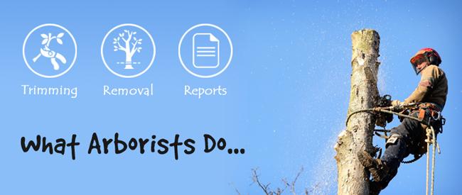 what-arborist-do-infographic