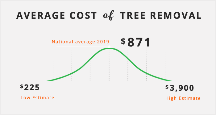 average-cost-of-tree-removal4