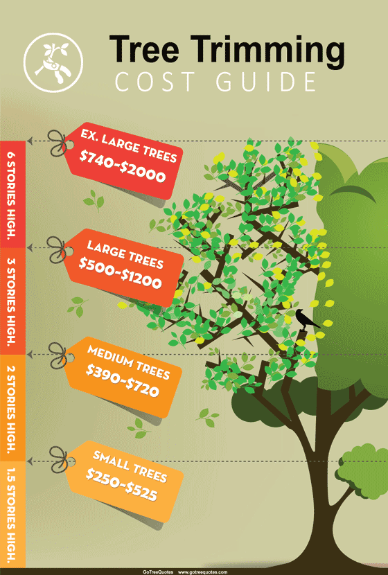 Tree Trimming Cost Guide 2021 Compare Prices Save 43