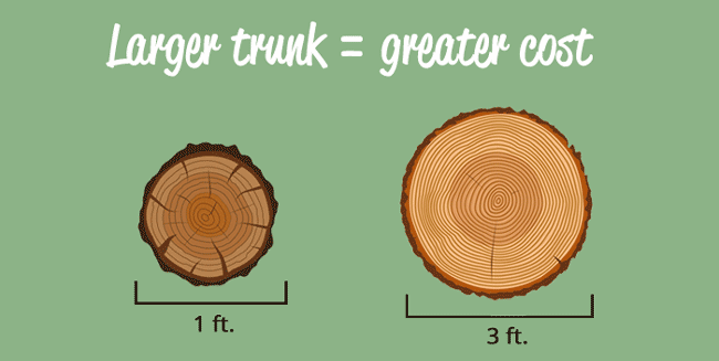 trunk-size-infographic
