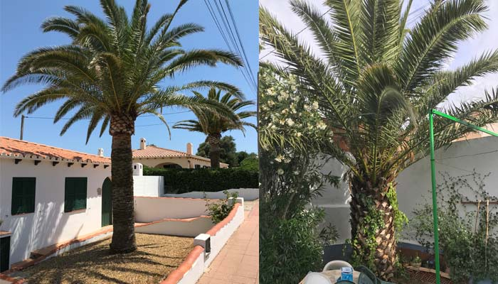 palm-tree-removal-cost-factor-2-access