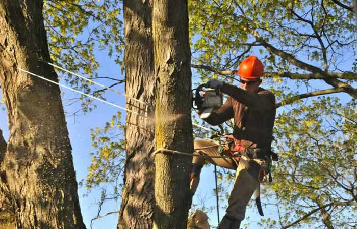 Large-tree-limb-removal