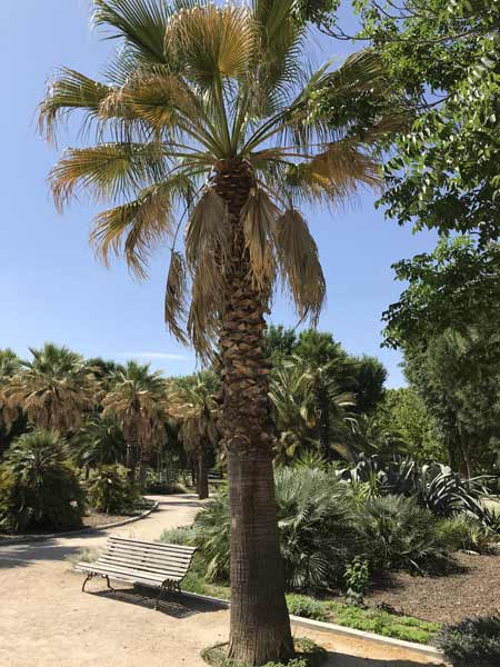 Medium-palm-tree-removal-cost-example