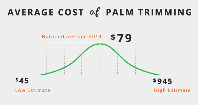 average-cost-of-palm-tree-trimming