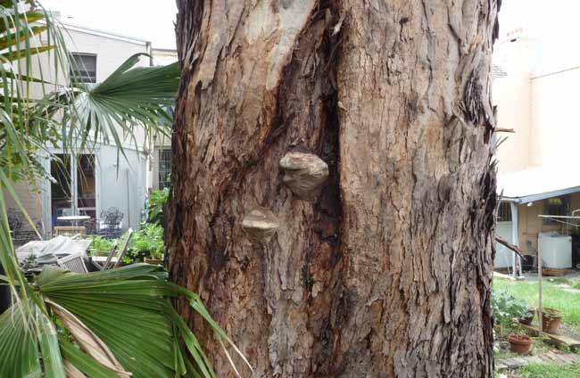 bracket-fungi-example