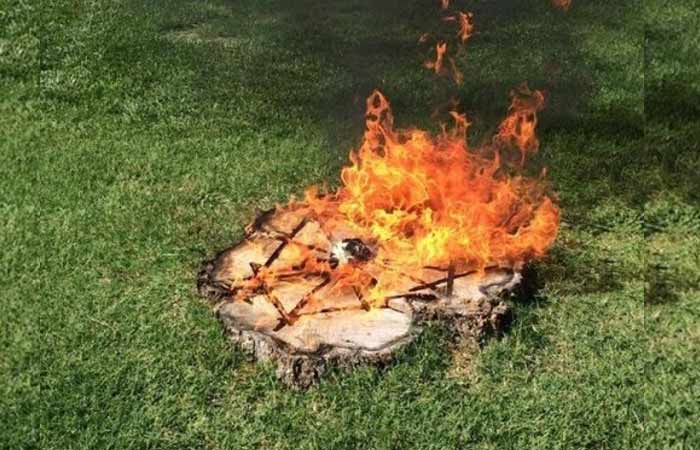 burn-out-tree-stump-wih-lines-cut