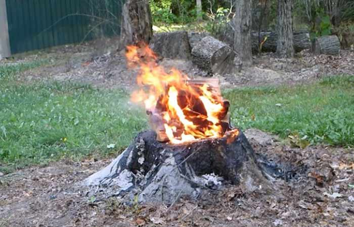 burn-out-tree-stump