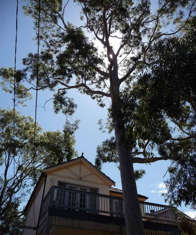 calculate-cost-of-gum-removal-sydney