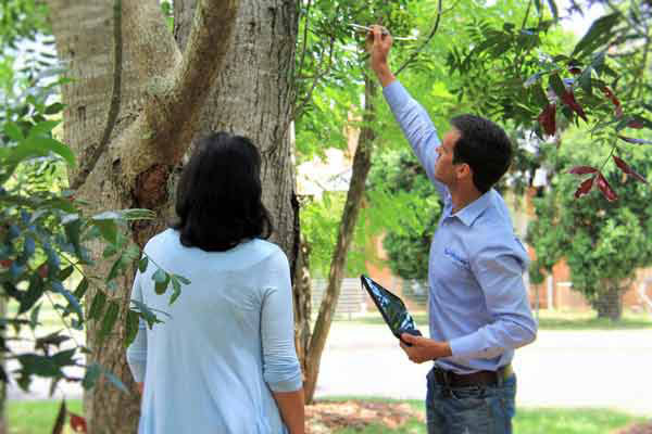 consulting-arborist-inspecting-tree