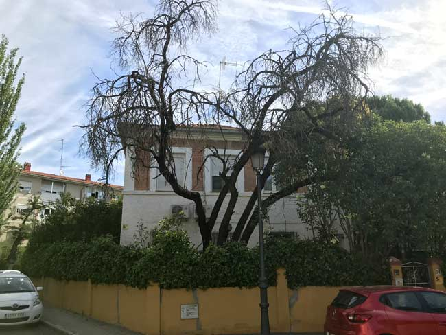 dead tree at front of property