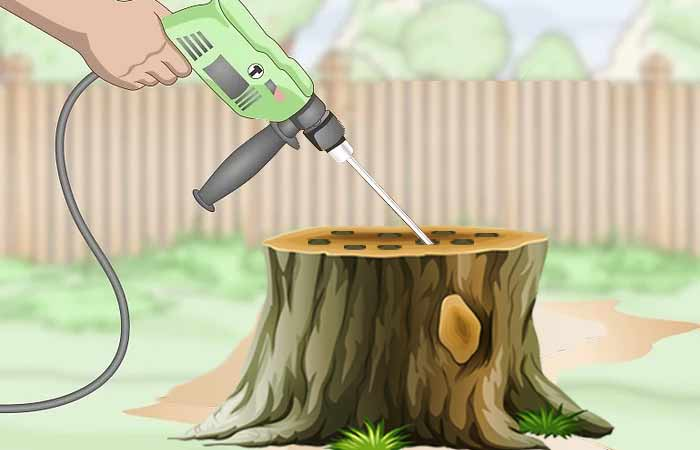 drill-holes-in-stump