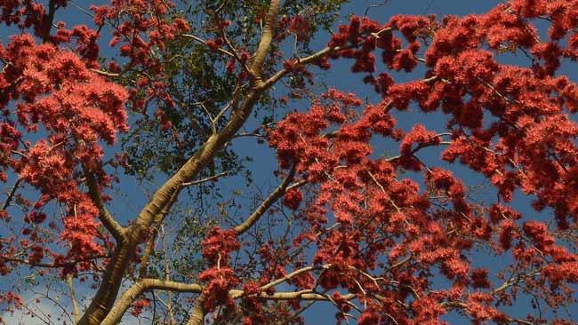 excessive flowering example