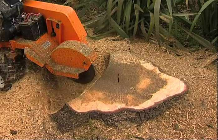 grind-out-stump-with-stump-grinder