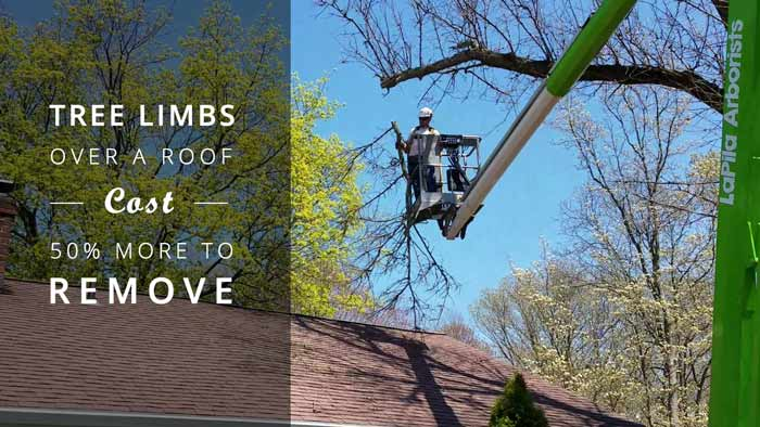 removing-tree-limb-over-home