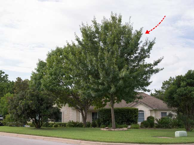 small-oak-tree-removal-cost-example-1