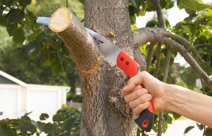 small-tree-limb-removal-cost-example-1
