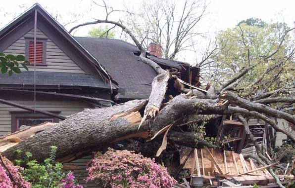 tree-fallen-on-property-and-house