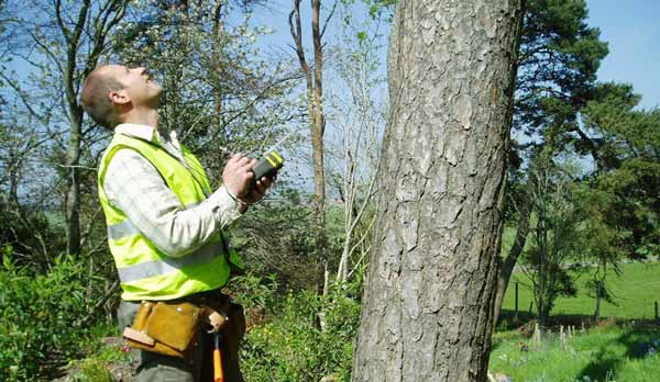 tree-inspection-by-level-5-arborist
