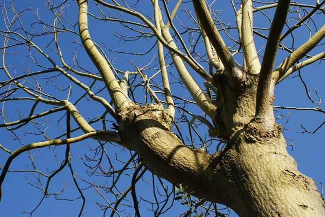 tree  late bloom example