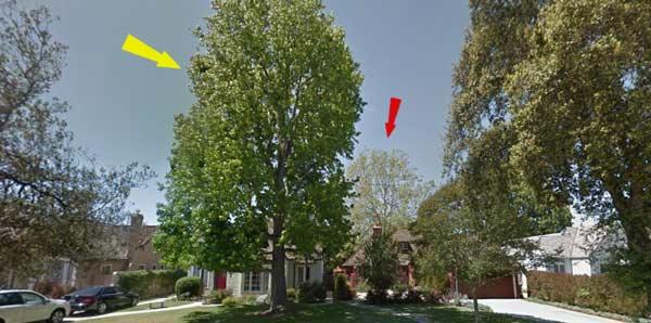 tree-location-on-property-front-yard-backyards