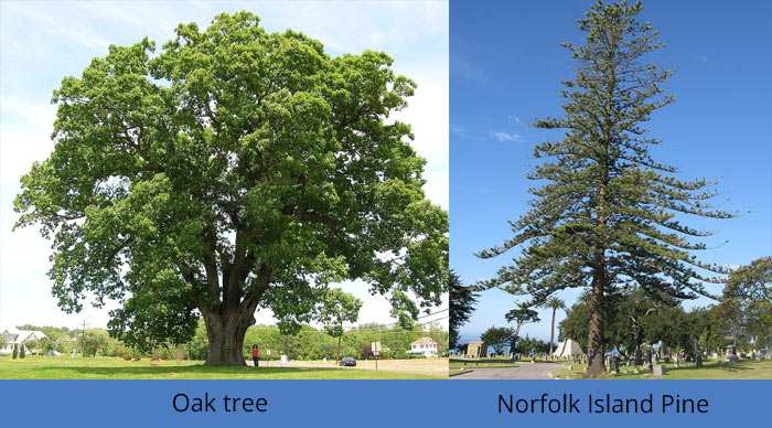 tree-removal-cost-by-tree-spread
