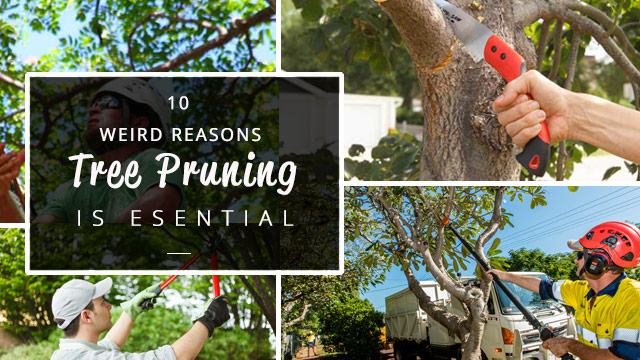 10-reasons-tree-pruning-is-essential