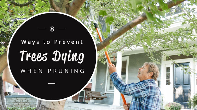 8-ways-to-prevent-trees-dying-when-pruning