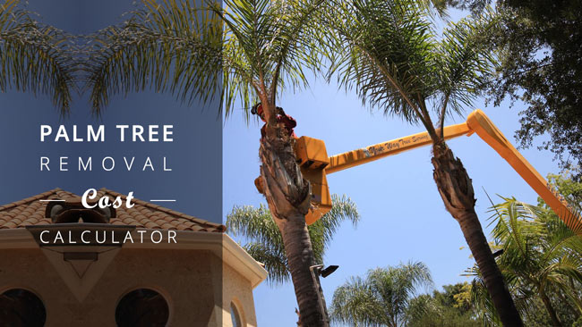 PALM-TREE-REMOVAL-COST-CALCULATOR