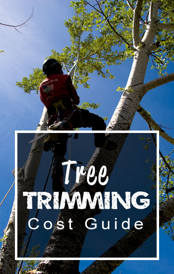 Tree-trimming-cost-guide-side-panel-image