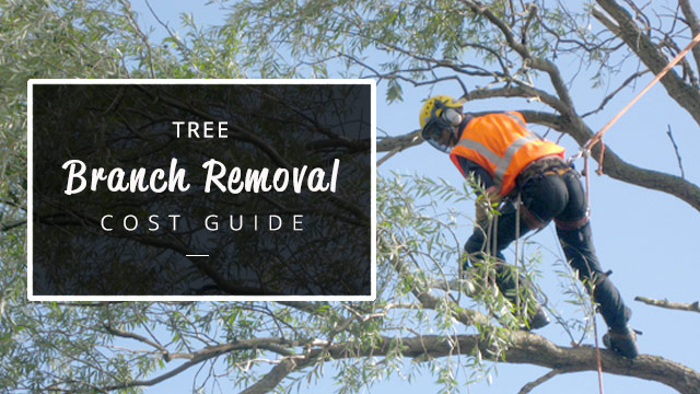 Tree-branch-removal-cost