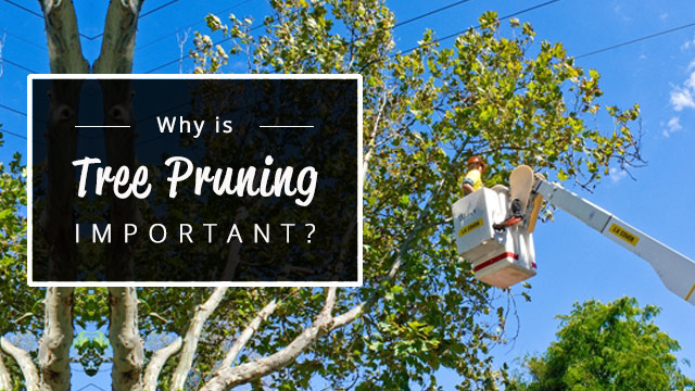 Why-is-tree-pruning-important