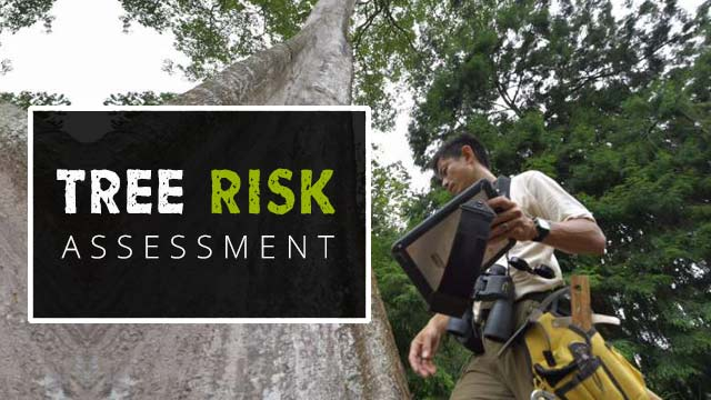 arborist-assessing-tree-risk