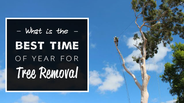 best-time-of-year-for-tree-removal2