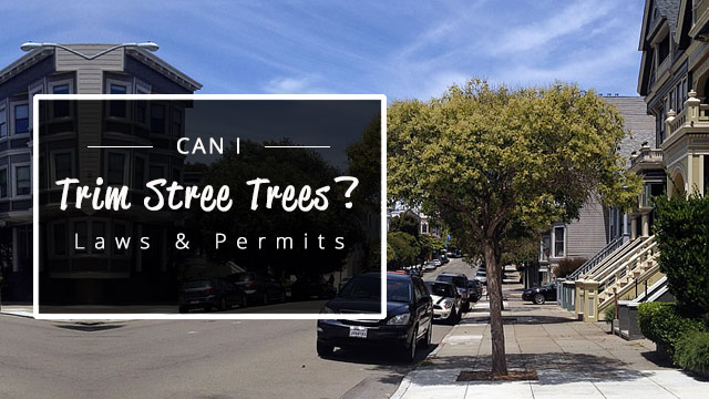 can-i-trim-street-trees