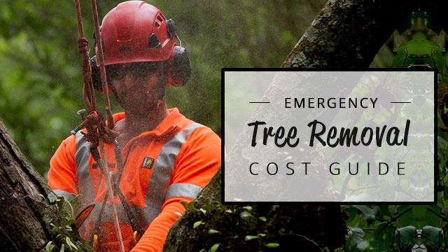emergency-tree-removal-cost-guide