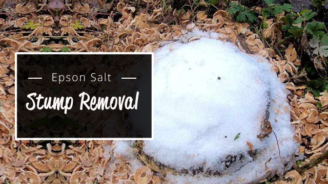 epson-salts-stump-removal