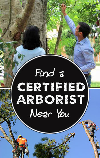 find-a-certified-arborist-near-you
