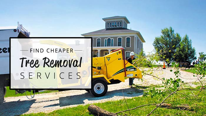 find-cheap-tree-removal-services
