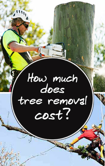 how-much-does-tree-removal-cost-sidebar-image