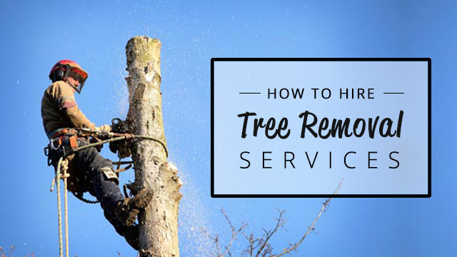 how-to-hire-tree-removal-services