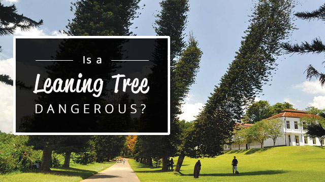 is-a-leaning-tree-dangerous