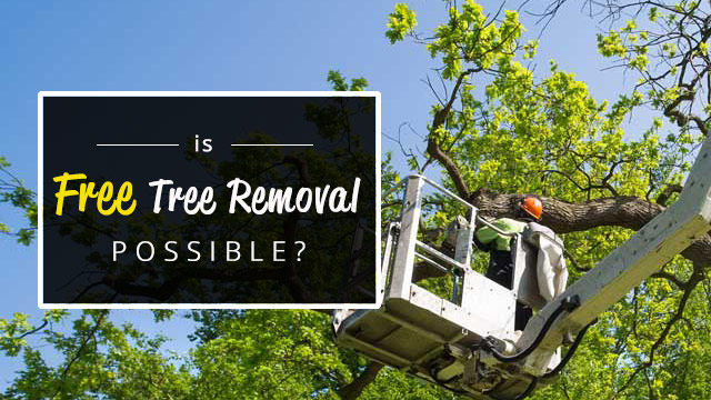 is-free-tree-removal-possible