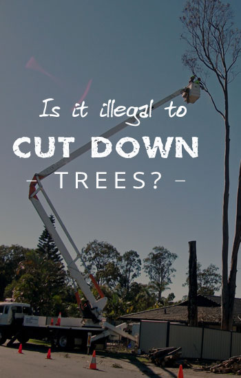 is-it-illegal-to-cut-down-trees
