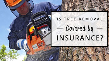 is-tree-removal-covered-by-insurance-350x200