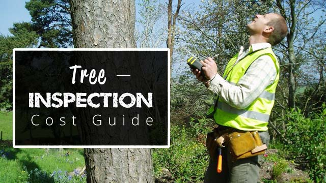man-inspecting-tree