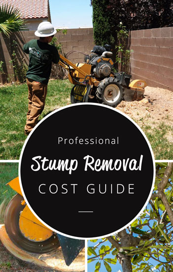 professional-stump-removal-cost-guide-350x550