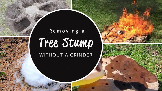 removing-a-tree-stump-without-a-stump-grinder