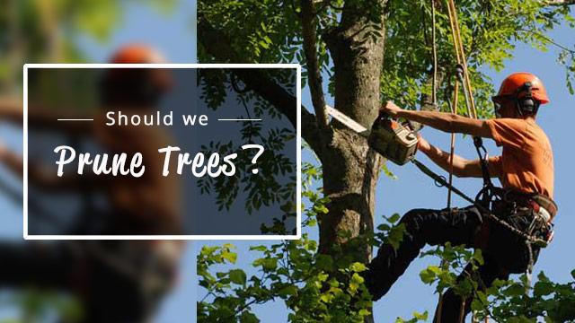 should-we-prune-trees-image